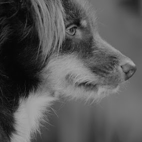 by Christof Mahengkeng - Animals - Dogs Portraits