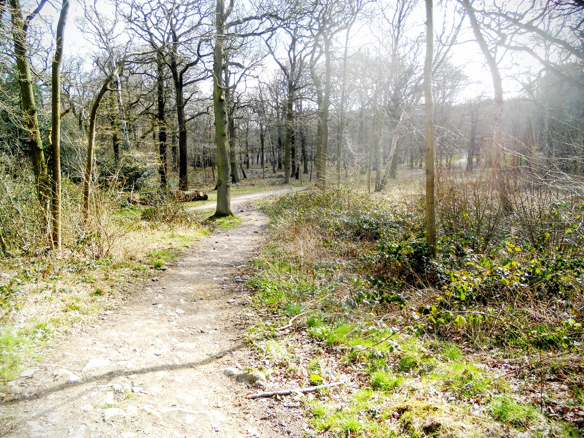 Swithland Wood