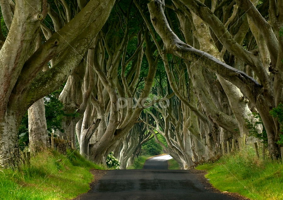 The Dark Hedges by Grzegorz Gluchy - Landscapes Travel ( ireland, tree, road )