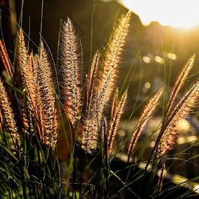 Grass by Christian Wilen - Nature Up Close Leaves & Grasses ( ewilen,  )