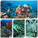景点珊瑚礁 icon