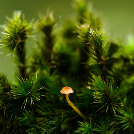 comfortable by Dy Djoenaedy - Nature Up Close Mushrooms & Fungi