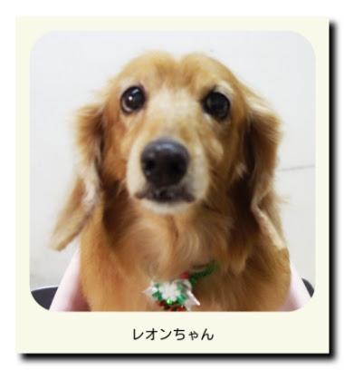 ミニチュアダックスフンドのレオンちゃん