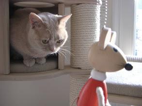 Photo: mir auch! (Wohnzimmer)