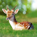 The Deer icon
