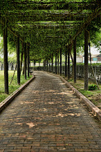 Photo: A path shaded with shrubs in Okayama