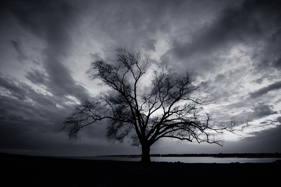 Alone by Matthew Robertson - Black & White Landscapes ( sky, connecticut, tree, black and white, silhouette, solitary tree, ocean )