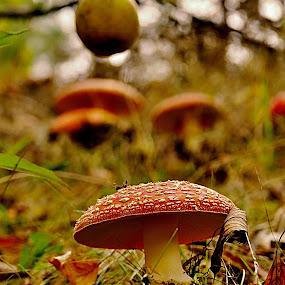 by Lenka Bryndová - Nature Up Close Mushrooms & Fungi (  )