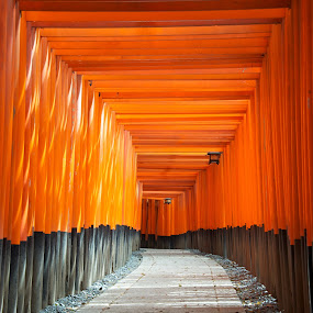 Fushimi Inari Shrine by Paul Atkinson - Landscapes Travel ( temple, orange, torii, red, japan, shrine, inari, kyoto, column, fushimi, pillar, gate )