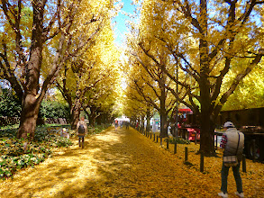 Photo: Yellow tunnel and carpet at Jingu Gaien's Gingko avenue, Tokyo, taken at the end of this November. Although I enjoy my life in India, I always miss the beauty of four seasons in Japan. The place looks popular among Chinese tourists also.  8th November updated (日本語はこちら) - http://asksiddhi.in/blog/display/68/view
