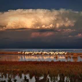 ------------ by Dimitrios Lamprou - Uncategorized All Uncategorized ( water, clouds, sky, sea, flamingos )