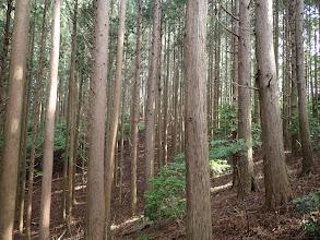 植林で下草が少ないのを確認