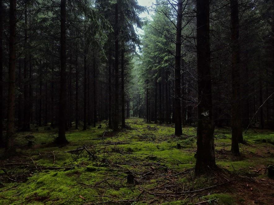 Дорога лісом