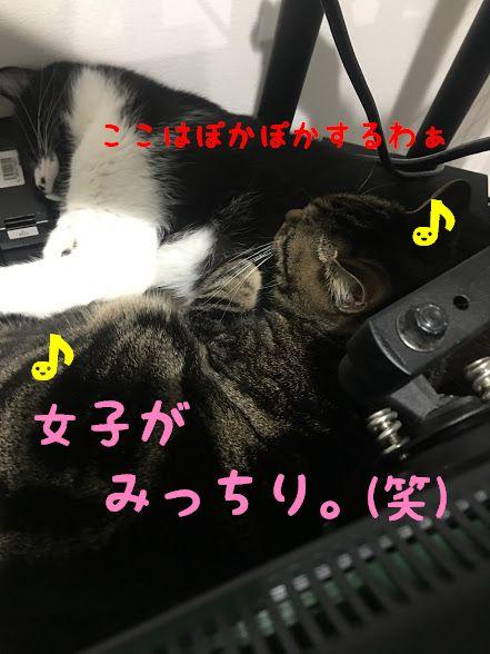 冬のエンジンルームに注意!車に乗る前に始めよう「猫バンバン」
