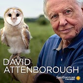 Wild with David Attenborough