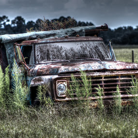 Out to Pasture by Rob Frederick - Transportation Automobiles ( pasture, truck, ford truck, ford, junk )