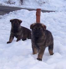 Photo: Ayla og Ailo for første gang i snøen