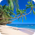 Palm Tree Wallpaper Best HD APK