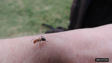 Photo: I got ditracted by an ant.