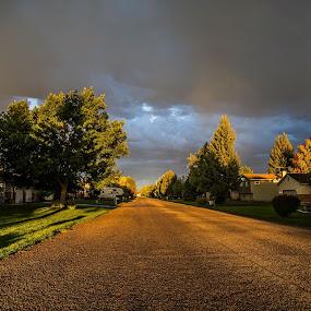 Golden Road by Mark Richardson - Landscapes Sunsets & Sunrises