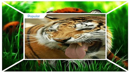 Truculent Tiger Live Wallpaper - náhled