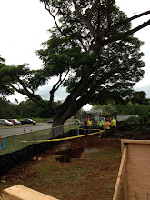 Photo: While we were in a teacher training this morning, the tree cutters started cutting down the monkeypod tree.