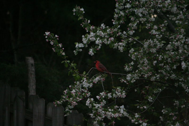 Photo: Red & blooms.  +271