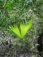 Photo: Artistic shot of this lovely plant deep in the jungle