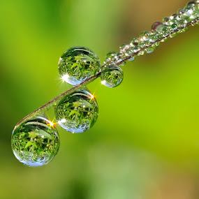 Pearl Beads In The Morning by Petrus Arif - Abstract Water Drops & Splashes