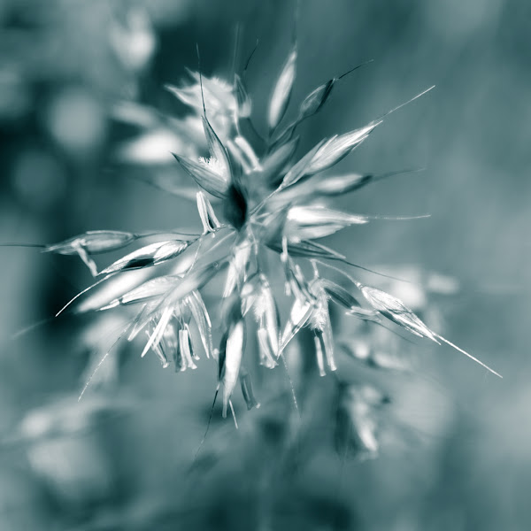 Photo: crystal like grasses