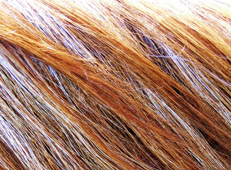 """Photo: Subtle symmetry in my red roan's mane - For #EquineTuesday curated by +Jillian Chilson +#EquineTuesday  #pixelworld  Here's a great explanation of a """"roan horse"""": http://en.wikipedia.org/wiki/Roan_(horse)"""