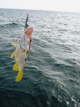 Photo: 金田さんが釣った ハシグチウオ。