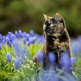 Quaylar the Cat by Casey Bebernes - Animals - Cats Portraits
