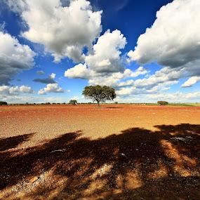 Shadow by Ricardo Zambujo - Landscapes Prairies, Meadows & Fields