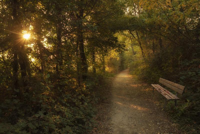 autunno nel bosco di angart71