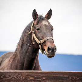 Horse by Debbie Quick - Animals Other Mammals ( horse, debbie quick, animal, farm, blue chip farm, debs creative images, new york, hudson valley, pet, wallkill,  )