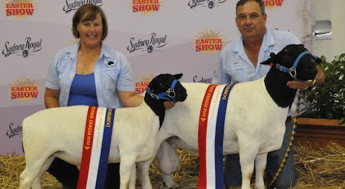 Winners Are grinners: Fiona and Martin Mead with their Grand Chapion Ewe and Ram from the Sydney Royal Easter Show. Photo: Wayne Jenkins