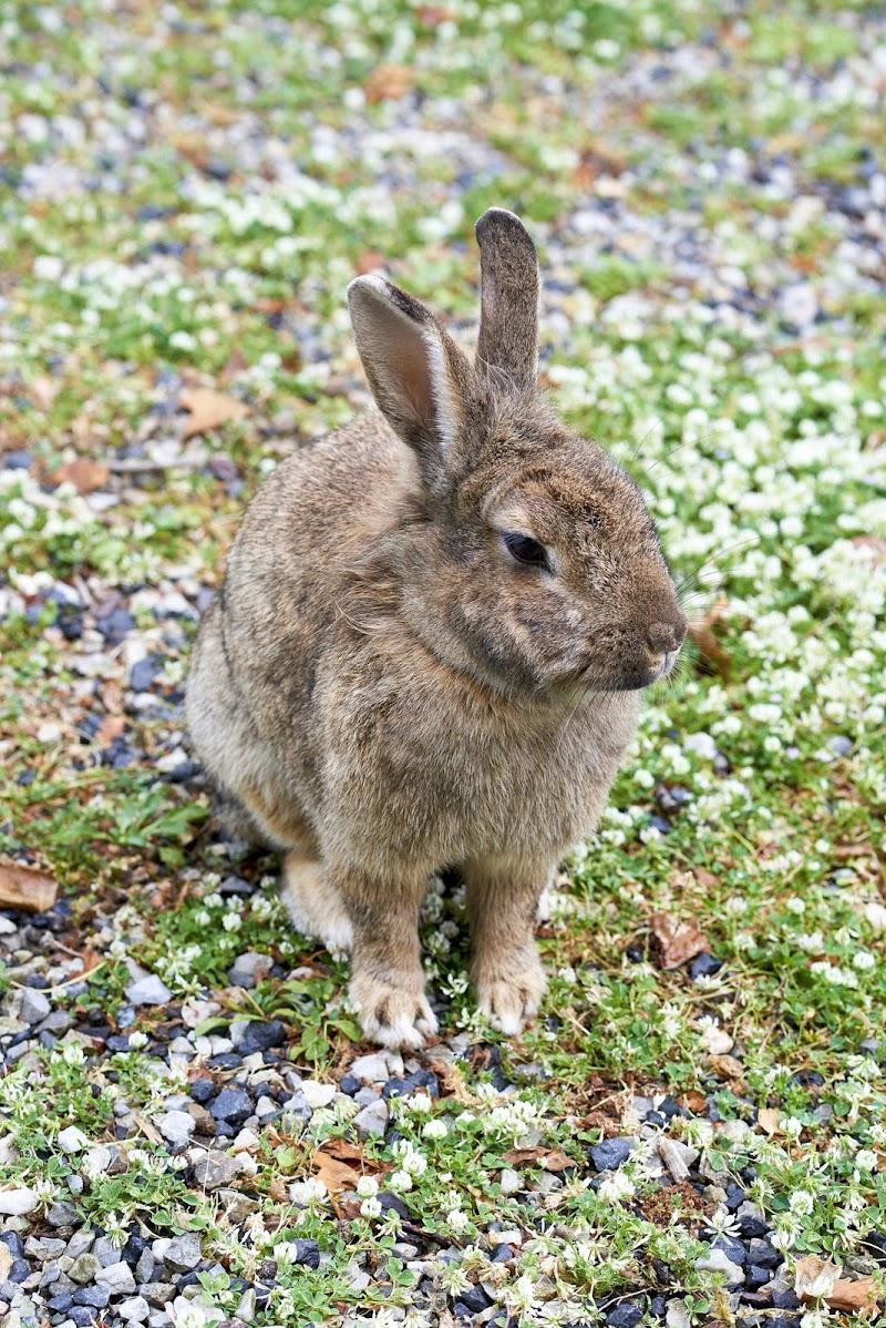 rabbit di manolina