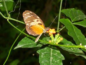 Photo: A beautiful butterfly