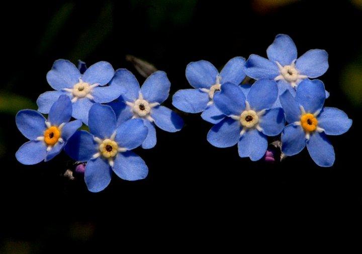 Blu in natura di Luca Bettosini