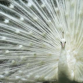 Unique by Frans Widi - Animals Birds