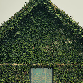 Creeping Fig by Michael Mercer - Buildings & Architecture Other Exteriors
