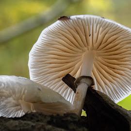 Fungi by Natasja and Martijn - Nature Up Close Mushrooms & Fungi ( macro, fungi, autumn, forest, mushrooms )