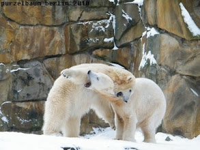Photo: Spasseisbaerchen Knut und Gianna :-)))
