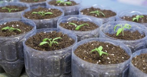 nurserylive-grow-from-seed-3