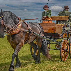 off to market by Cornish Nige  - Animals Horses ( horse, buggys, carts, grass, hdr )