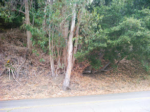Photo: Judging solely on color, I would say the moistest part of the bank between the eucalyptus and oak.