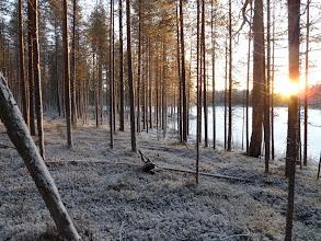Photo: Hossa 29.11.2011. Leimikolta. Kuva: Lea Vainio.