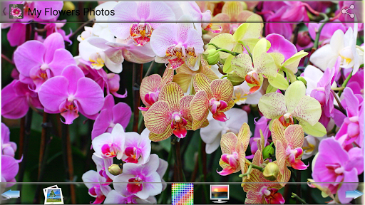 玩娛樂App|私の花の写真免費|APP試玩