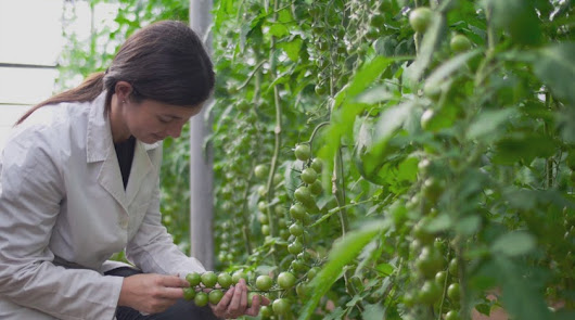 Junta prevé alcanzar las 5.000 hectáreas de cultivo ecológico